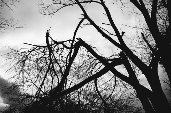 Fallen trees in Ried/ Stadtpark